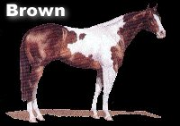 Brown Tobiano