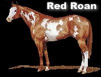 Red Roan Overo